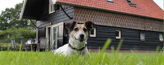 hond6.jpg
