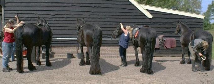 paarden1.jpg