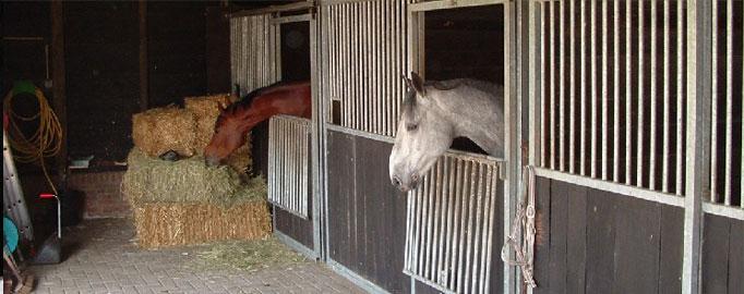 paarden3.jpg