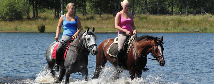 paarden5.jpg