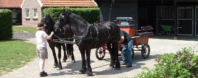 paarden6.jpg