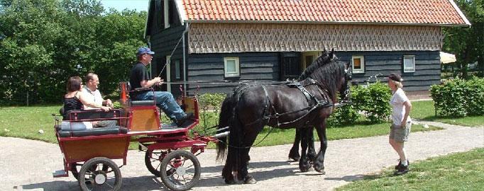 paarden7.jpg